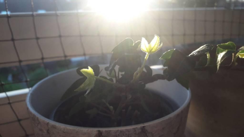 Frühlingssonne - Mein innerer Garten - Sabine Gärtner